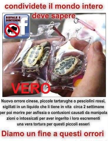 Tartarughepesci in piccoli sacchetti di plastica for Vasche di plastica per tartarughe